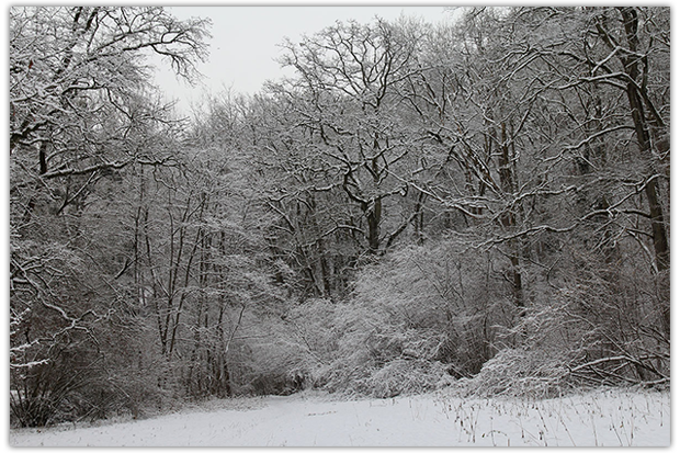 winter remseck 02